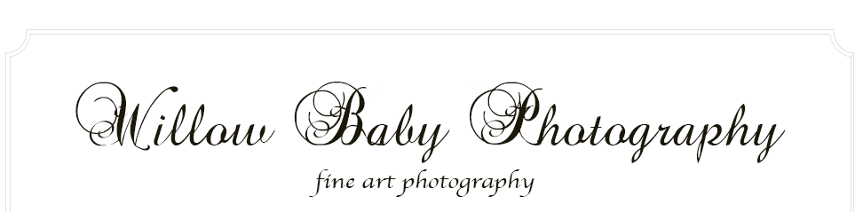 Willow Baby Photography logo